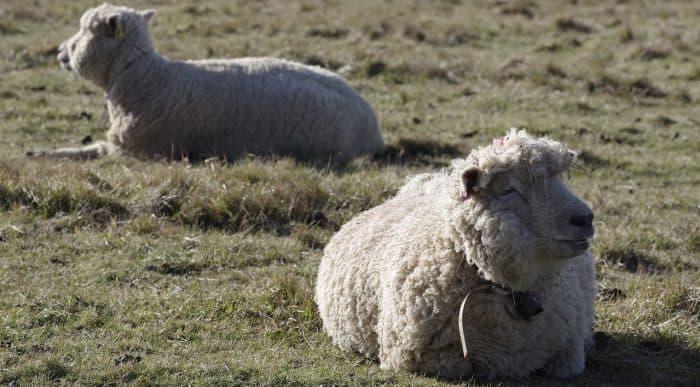 best wool for sweaty feet